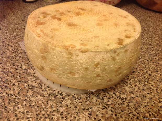 I let the rind go wild, I was pleased with the outcome, but I now realize why this cheese is supposed to be waxed for ageing.