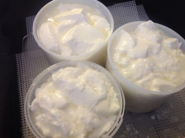 I just love the look of those curds sitting in the moulds.