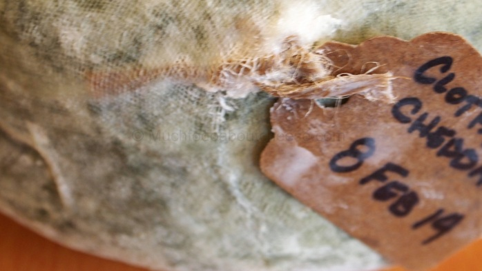 no mould on tag