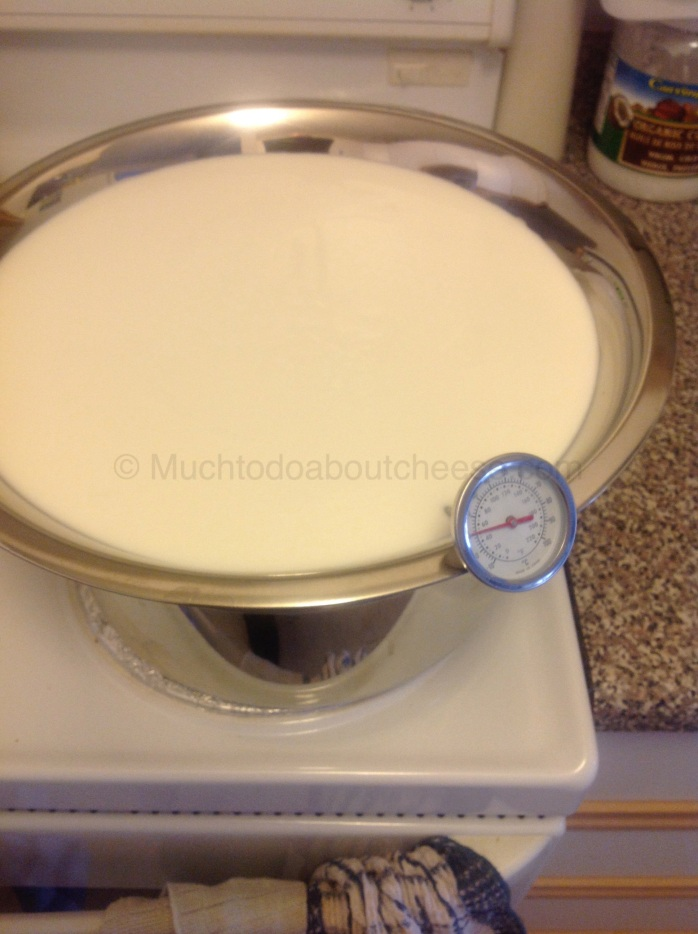 With my 4 litres of Goat's Milk I started making Feta.