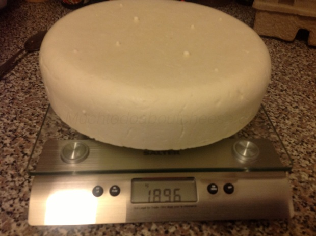 After pressing I chose to brine the cheese rather than dry salt it.  It was 1896g after brining.