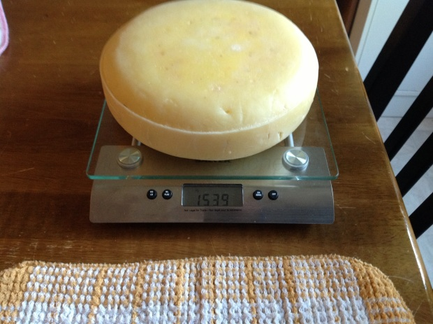 I weighed the cheese again and this time it was 1539g