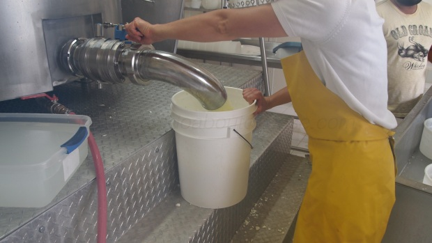 The 500 L vat is raised above the make room floor so gravity helps to drain the vat.