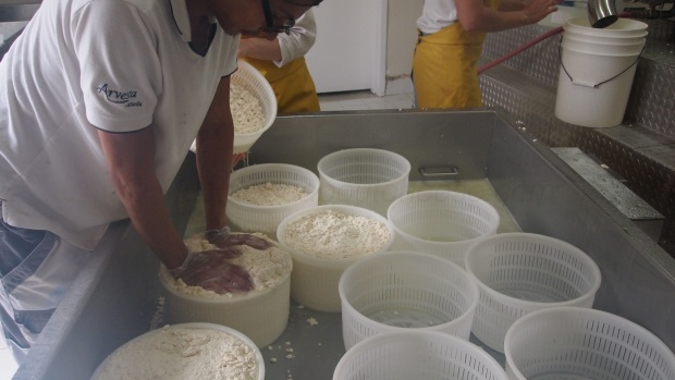 "Rhonda's helpers ""press the curd down in the moulds so that they can put as much in as possible."