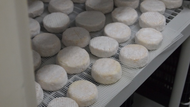 "Some ""La Bianca"", the Cheesiry's Camembert Style cheeses"