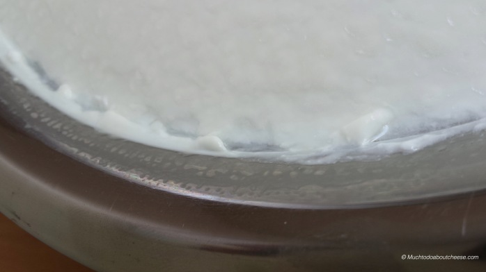 You can see the Geotrichum bloom mixed in with the whey