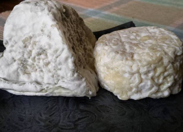 "Highland Hall and ""183"" are two of our bloomy rinds."