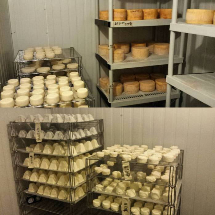 I am working on filling the aging rooms with cheese.  The top section is room 3 and yes those are Josef on the shelf.