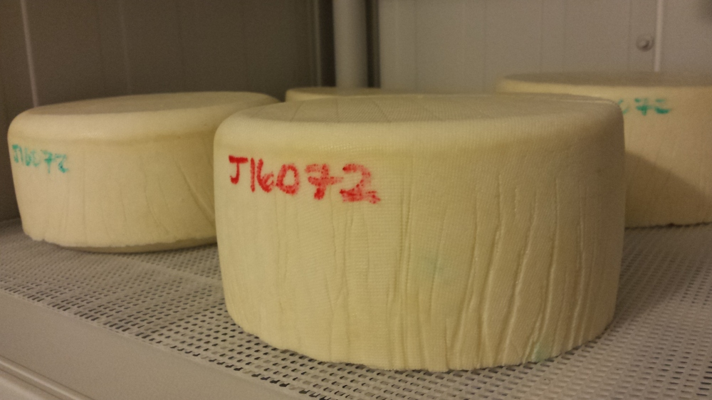 The first batches of Josef, based on an Appenzeller, and named for my Paternal Grandfather.